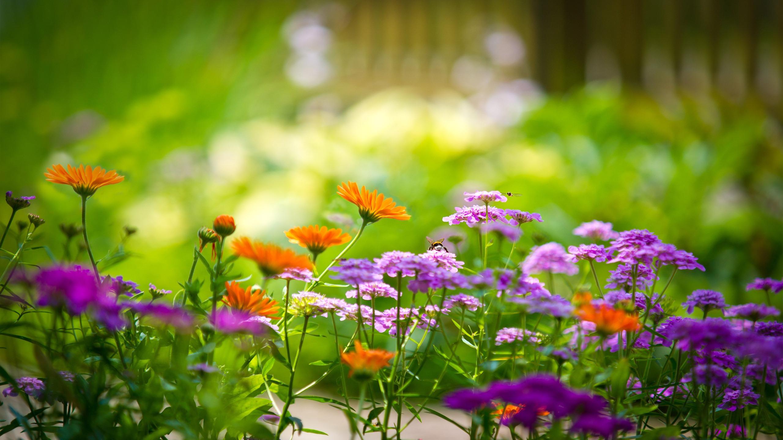 misflores de jardin