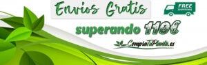 Comprar plantas online con envío gratis