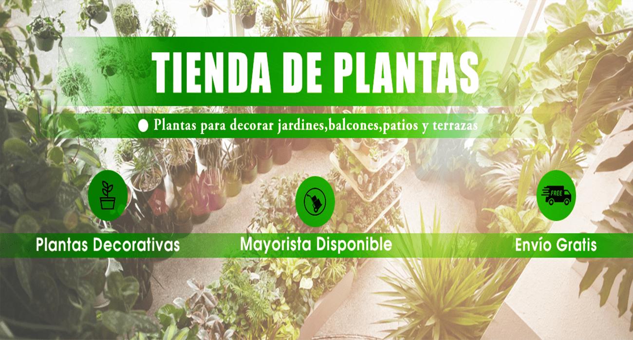 tienda de plantas online compratuplanta.es ofertas en plantas online